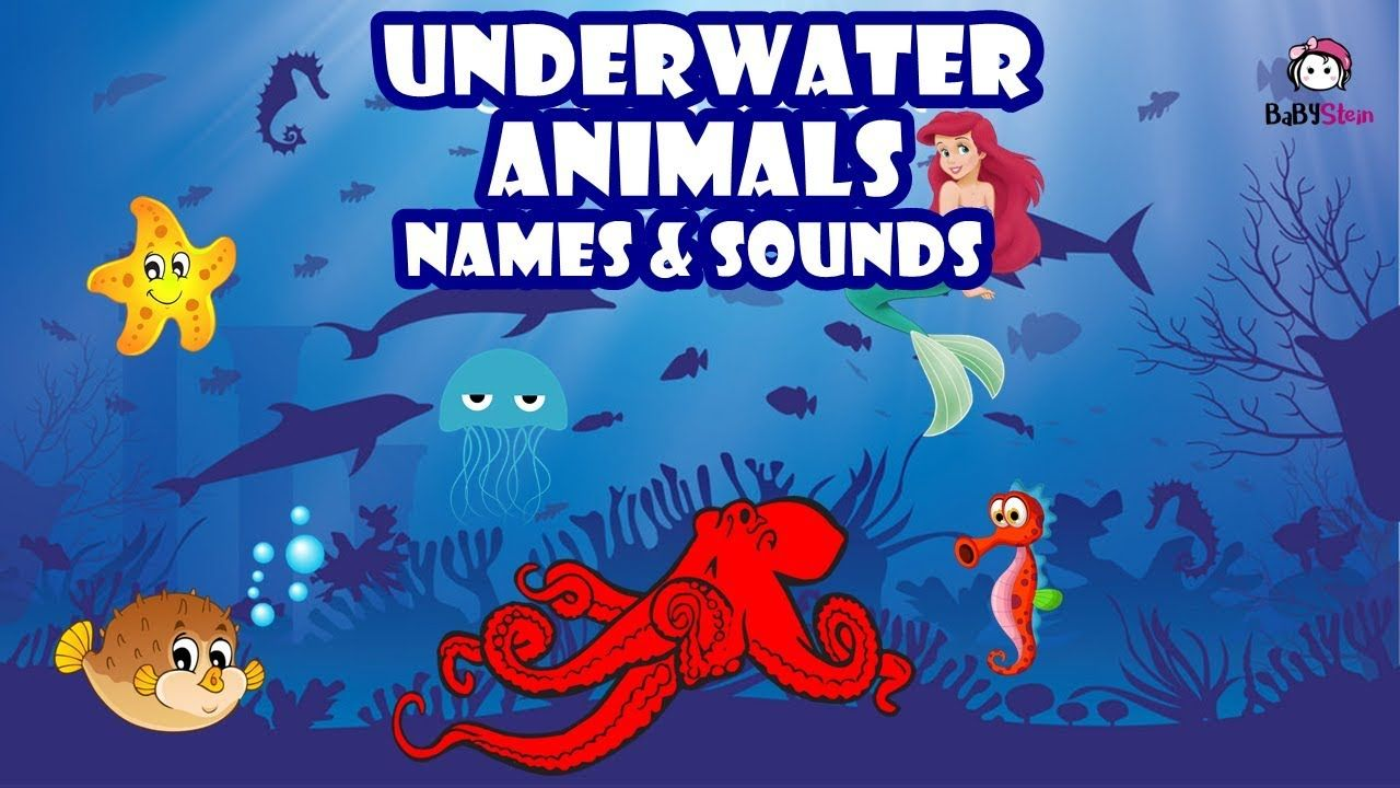 Sea Animals Names And Sounds For Kid Learn Real Life Ocean Animal Name Sea Animals Ocean Animals Animal Sounds