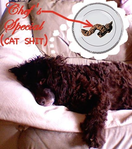 Dog Blog Sleep Dreams Cute Funny Lol