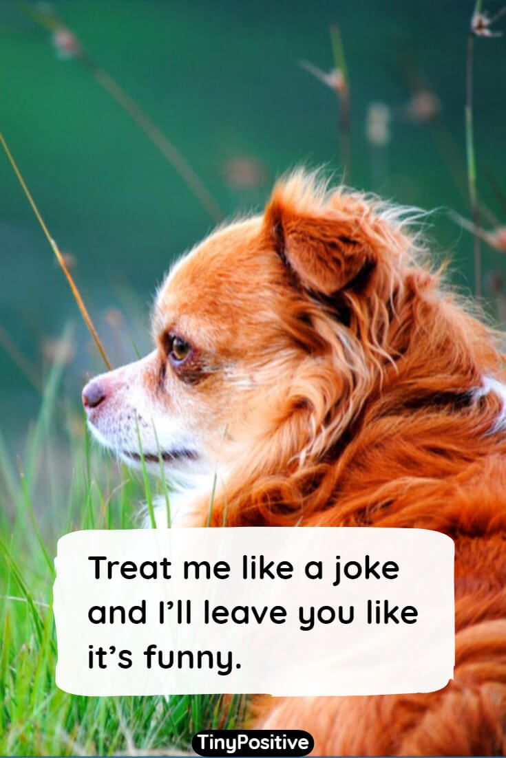 76 funny quotes to make you laugh short funny sayings and