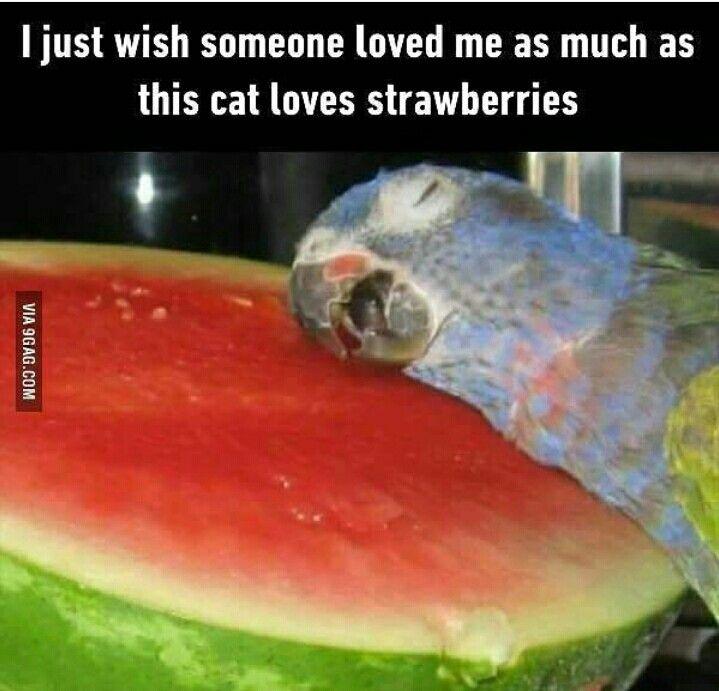 Kissa ♡ mansikka