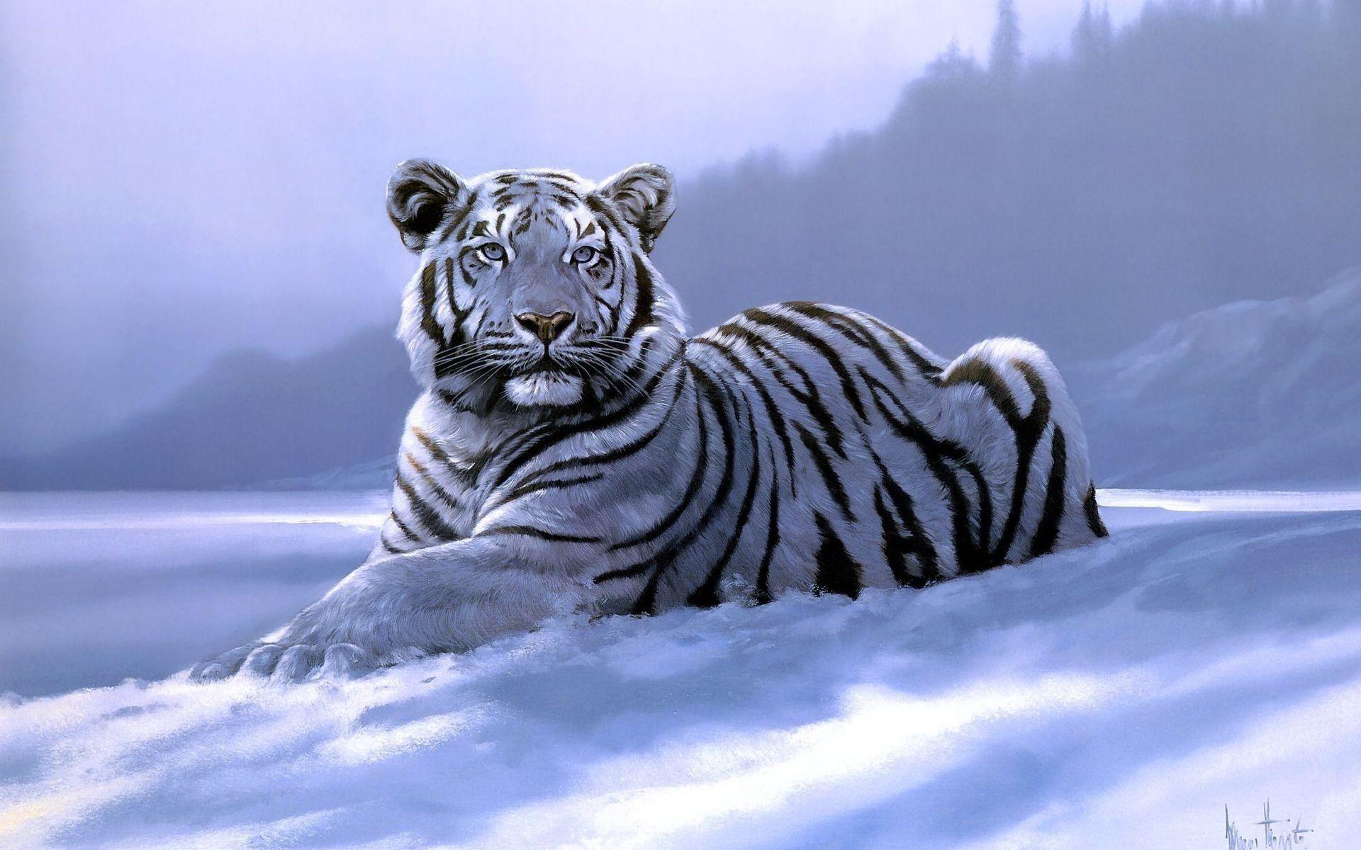 White Tiger Com Imagens Animais