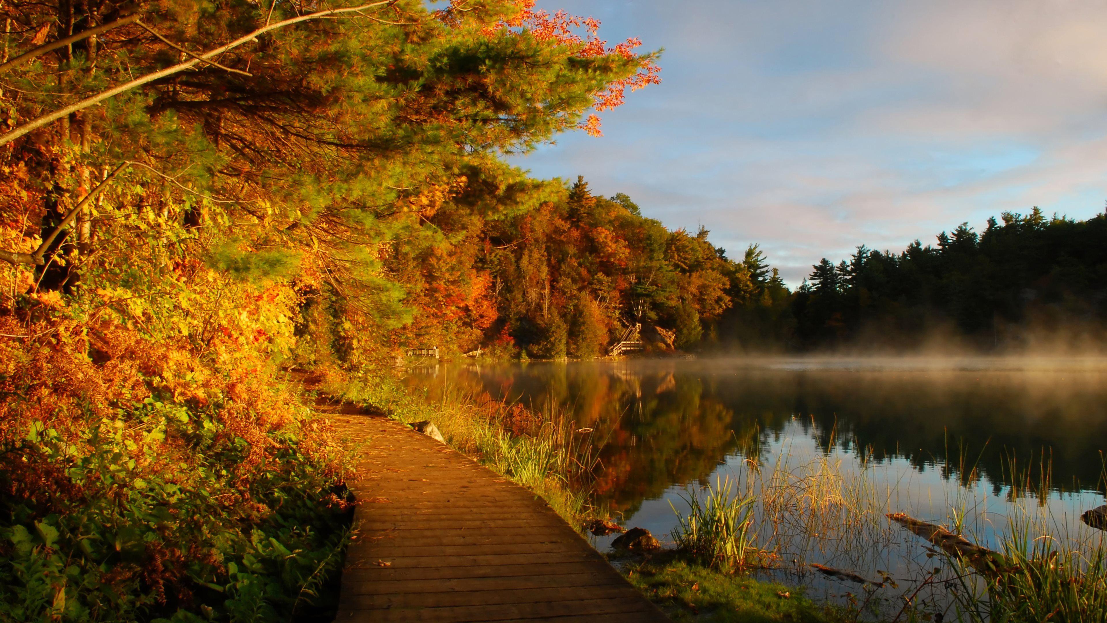 Outono Outono Folhas Nevoeiro Florestas Lago Paisagens Natureza Caminho Reflexões Água