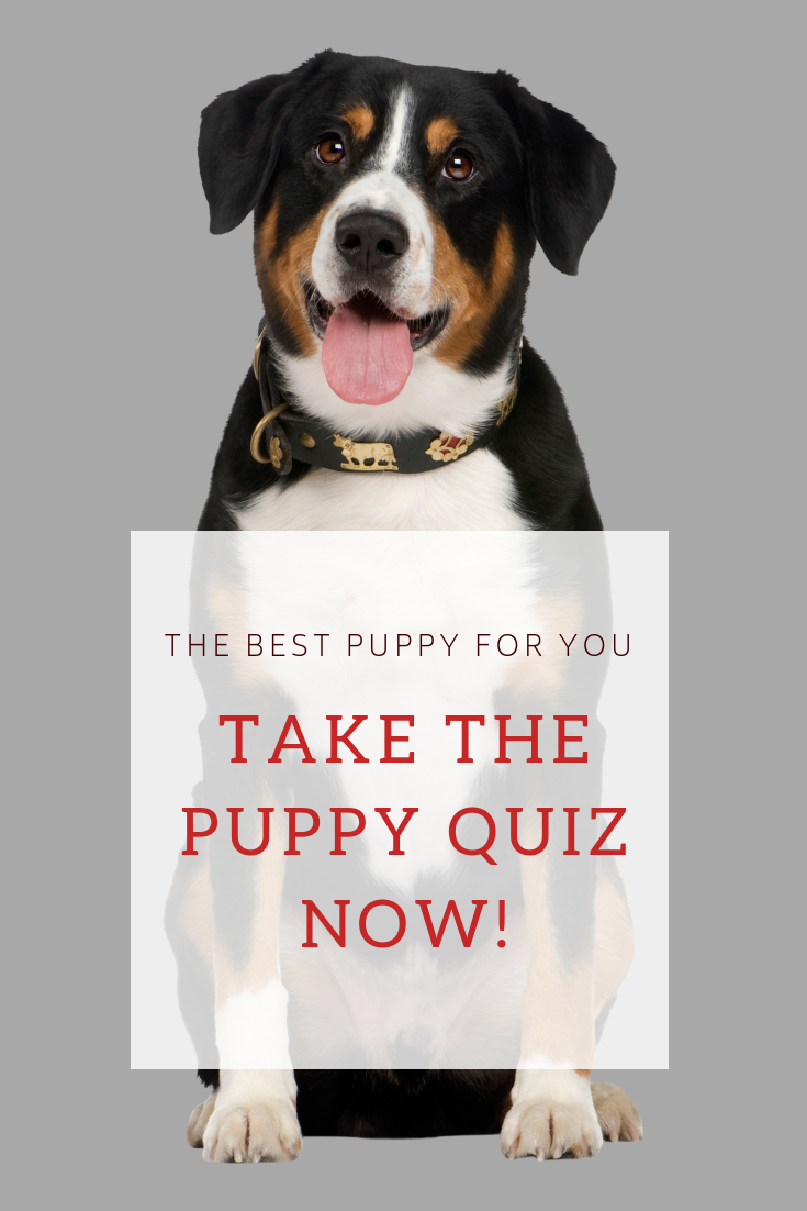 Take our quiz and find out your perfect puppy match now