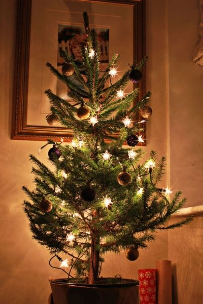 How to photograph your Christmas tree {how to get twinkle bursts of