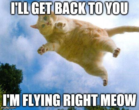 5e660ca6974c48fc5cfaf69c4e3dae40 bildresultat för flying meme memes pinterest meme, cat and memes