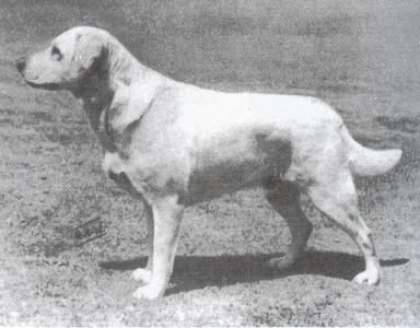 Braeduke Julia Of Poolstead Labrador Retriever Labrador Retriever