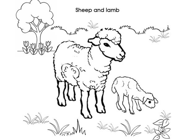Picture Of Sheep And Lamb Coloring Page Coloring Sky Lamb Drawing Sheep And Lamb Coloring Pages