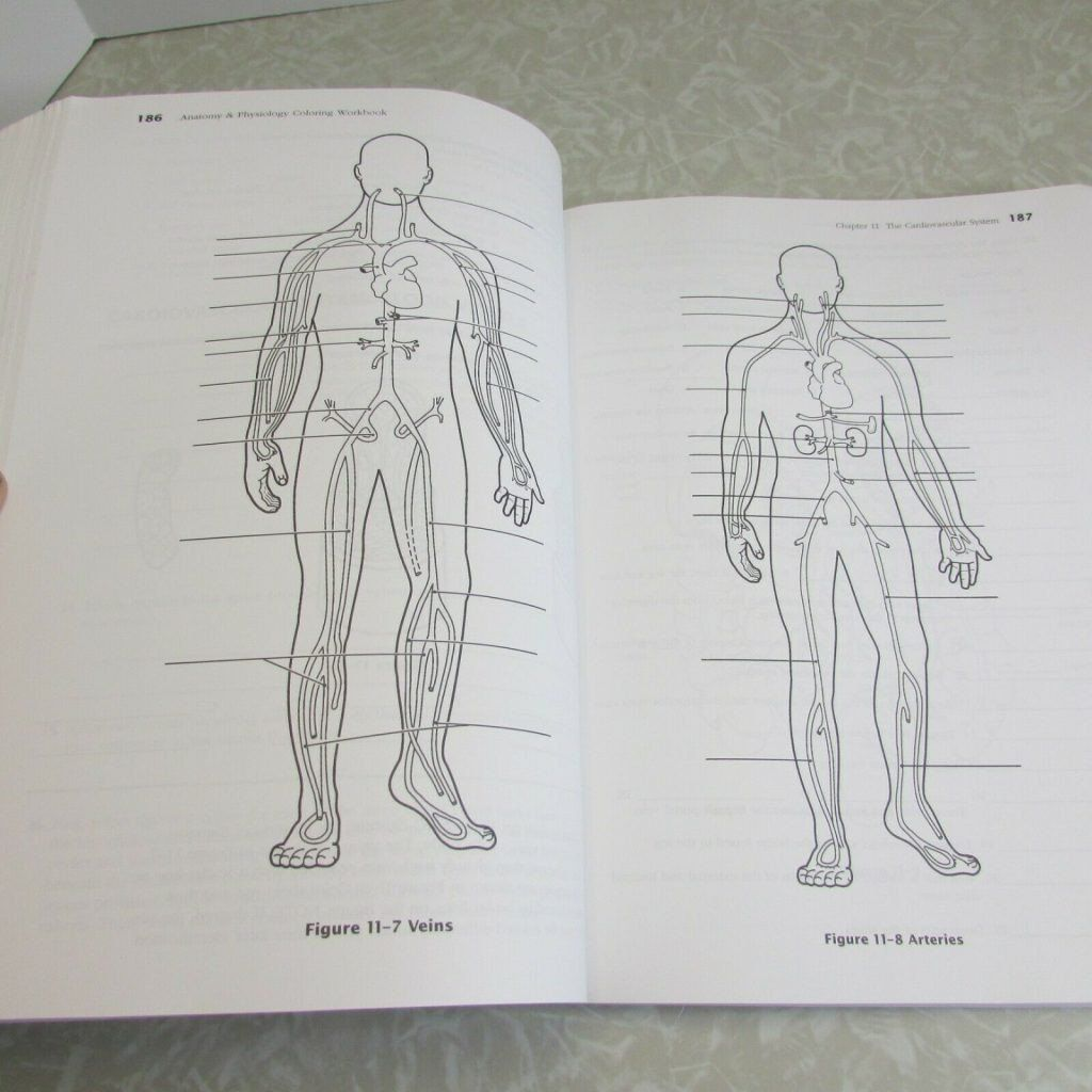 Anatomy And Physiology Coloring Workbook Awesome Coloring Pages
