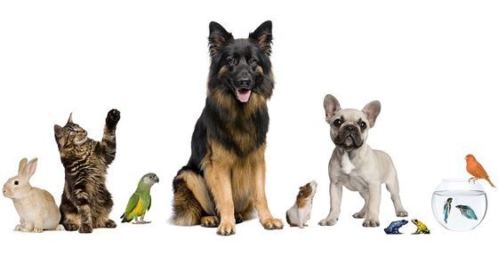 Home Sweet Home Pet Sitting Chandler Tempe And Ahwatukee Pet Sitter Animals Pet Sitters Pet Sitting Business