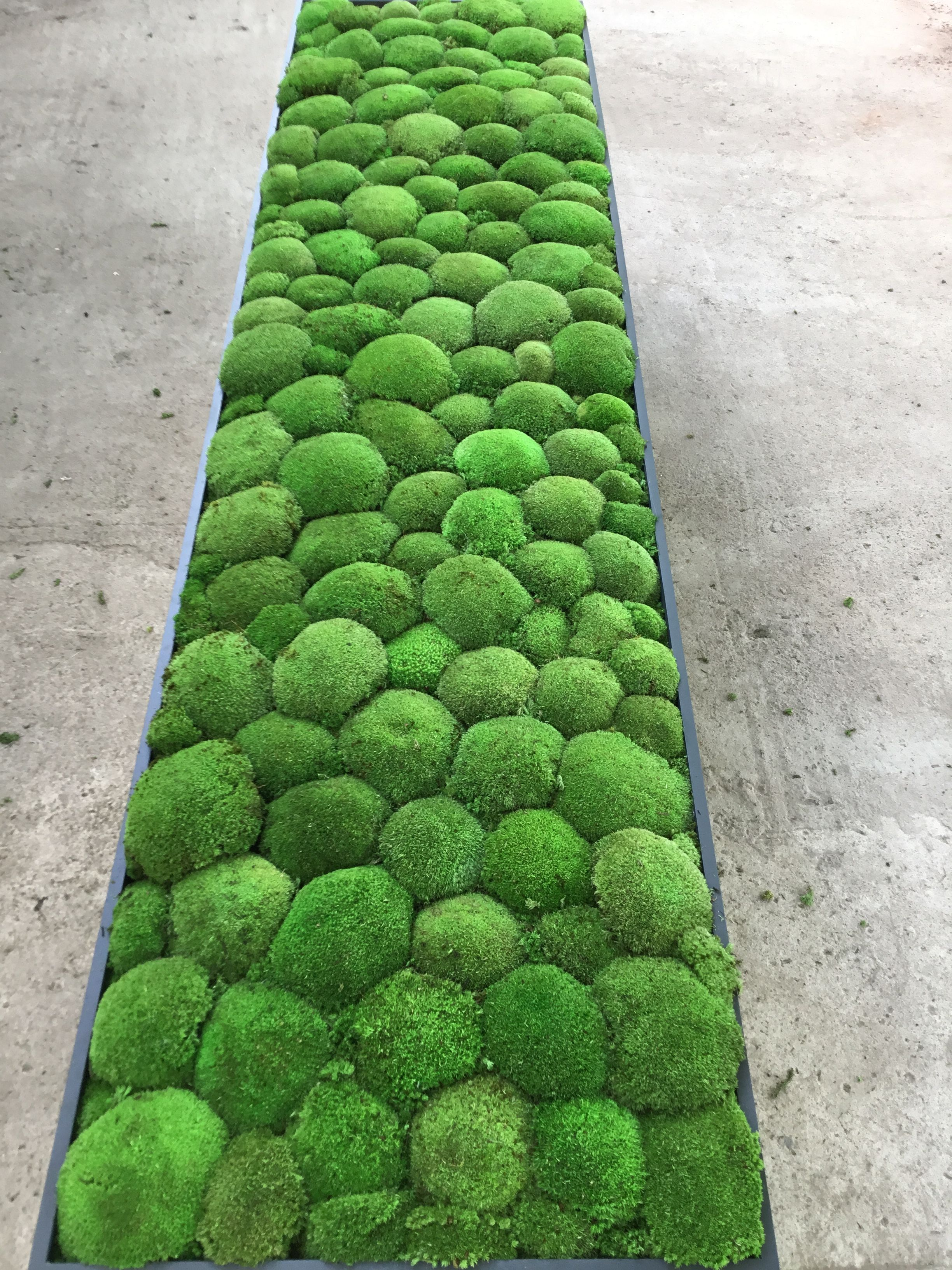 Moss Wall And Moss Art By Green Ecco Moss