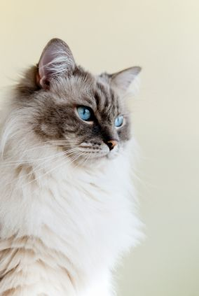 It's time for a new breed of cat insurance! Join other