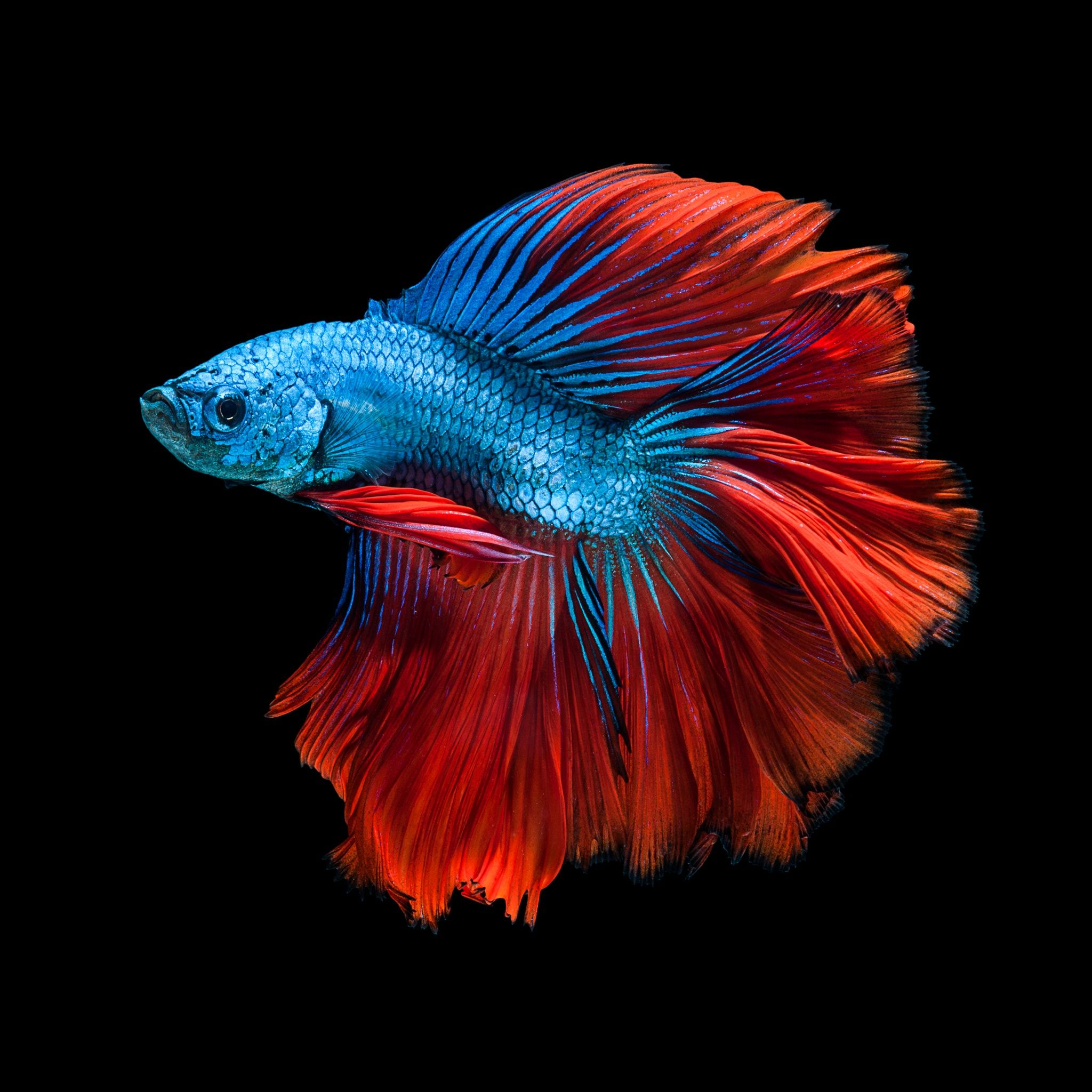 Pin By Farci2998 On Underwater Fish Wallpaper Beautiful Fish Colorful Fish
