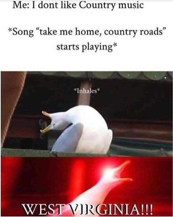 I Luv That Bird Clean Funny Memes Song Memes Really Funny Memes