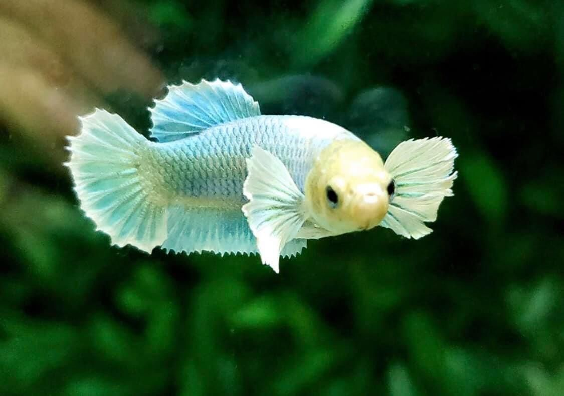 10 Of The World S Most Dangerous Fish In 2020 Dangerous Fish Fish Betta Fish