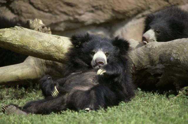 Wildlife SOS - Agra Bear Rescue Centre, Uttar Pradesh