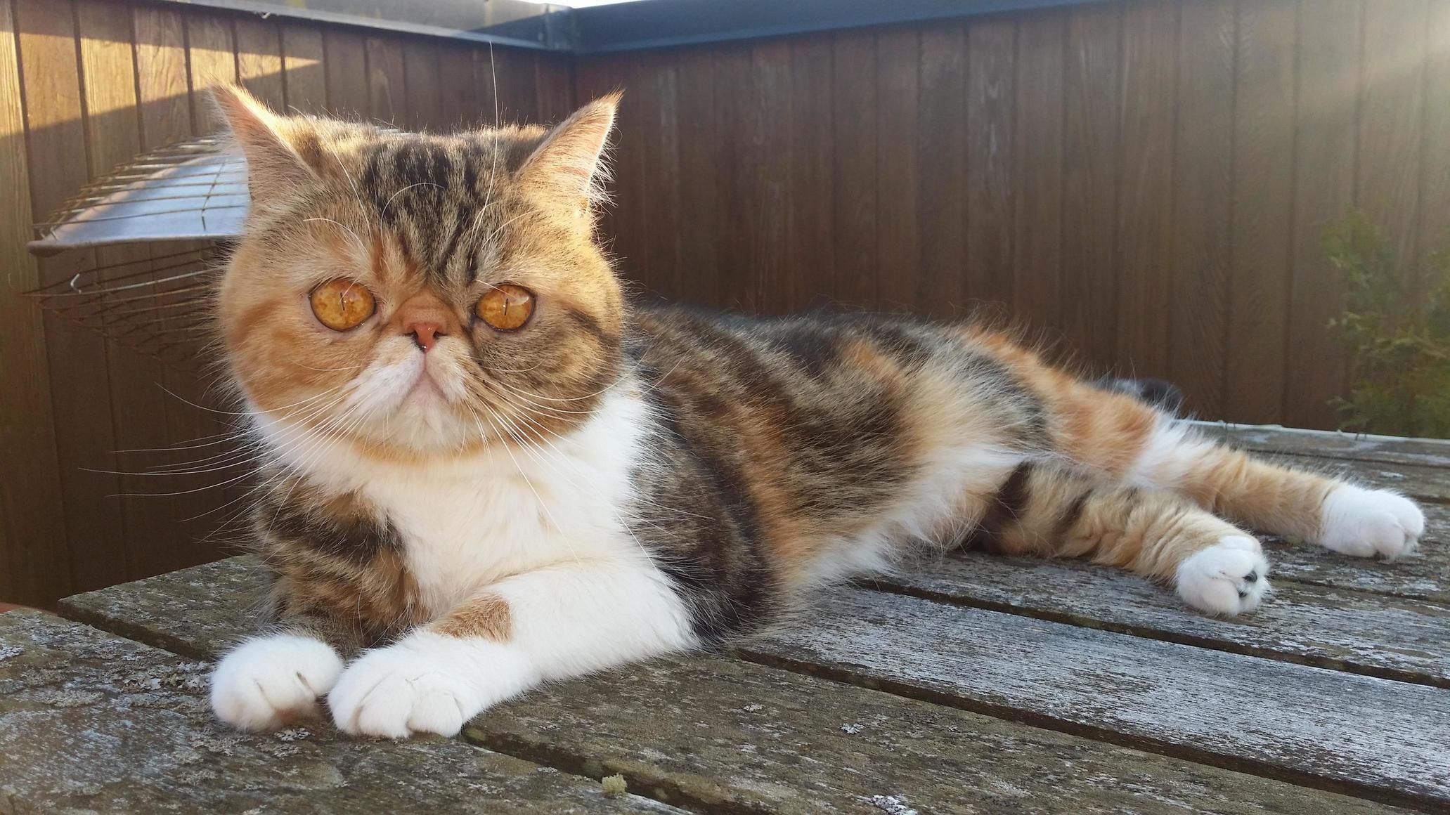 Golden eyes - http://cutecatshq.com/cats/golden-eyes/