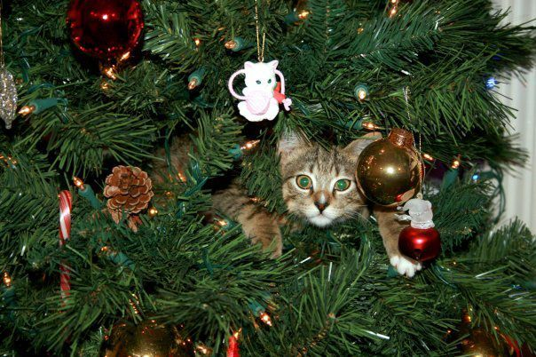 Charming Of Her Cat, Rusty, Who Loves Her Christmas Tree! A Green Eyed