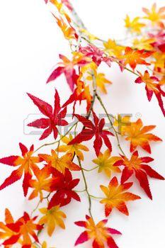Hojas de oto o autumn leaves hojas de rboles en 2019 - Descargar autumn leaves ...