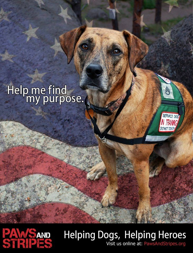 Helping Dogs Helping Heroes Together Dog Bless You And Paws