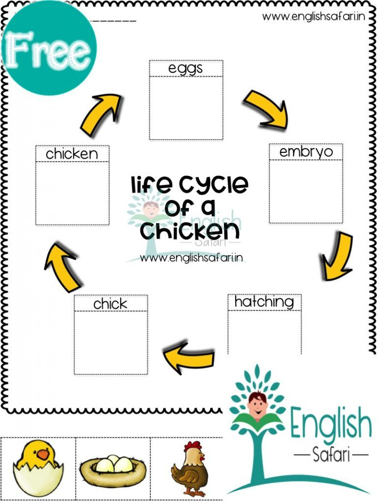 Life Cycle Worksheets For First Grade Free Www Worksheetsenglish Com Life Cycles Spring Science Activities Plant Life Cycle [ 1024 x 768 Pixel ]
