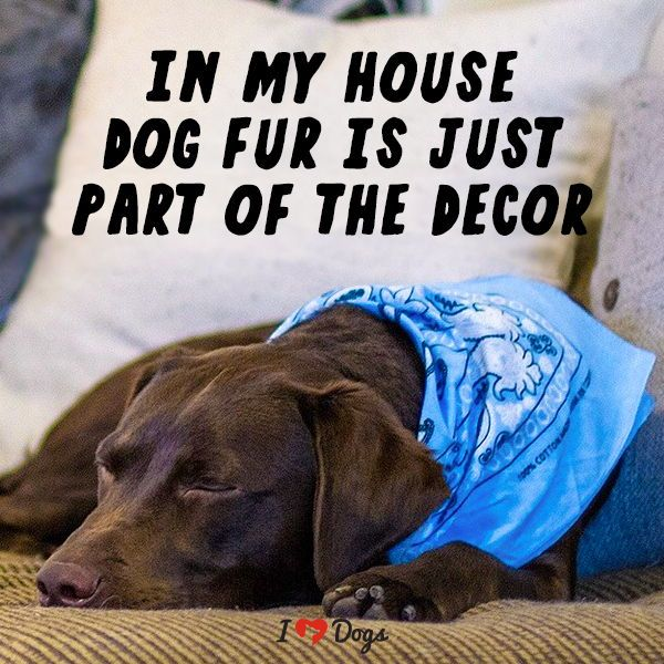 My Dog Is My Interior Decorator Dog Quotes Love Dogs Dog Quotes