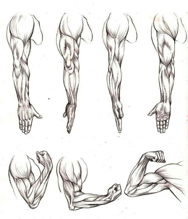 how to draw muscles step 3