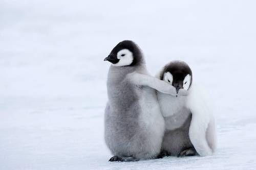 守るペンギン