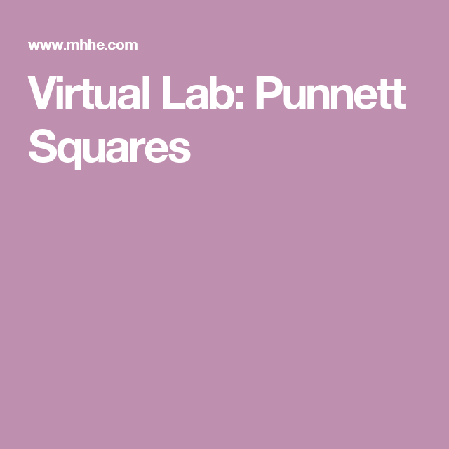 punnett square lab