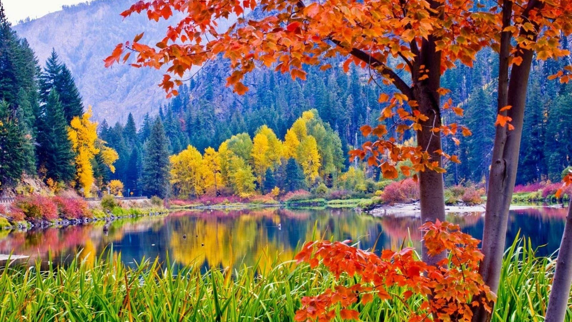 Colorful Colors Multicolored Scene Leaves Forest Nature Landscapes River Parks Multicolor Mountain Autumn Picture Fall Wallpaper Beautiful Nature Nature Photos
