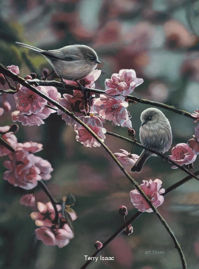 Spring Song, by Terry Isaac