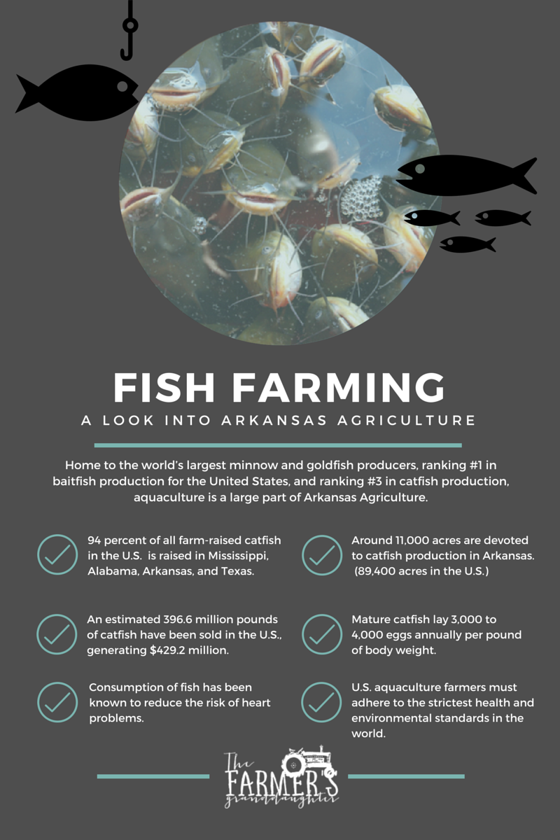 Fish farming for Facts about fishing