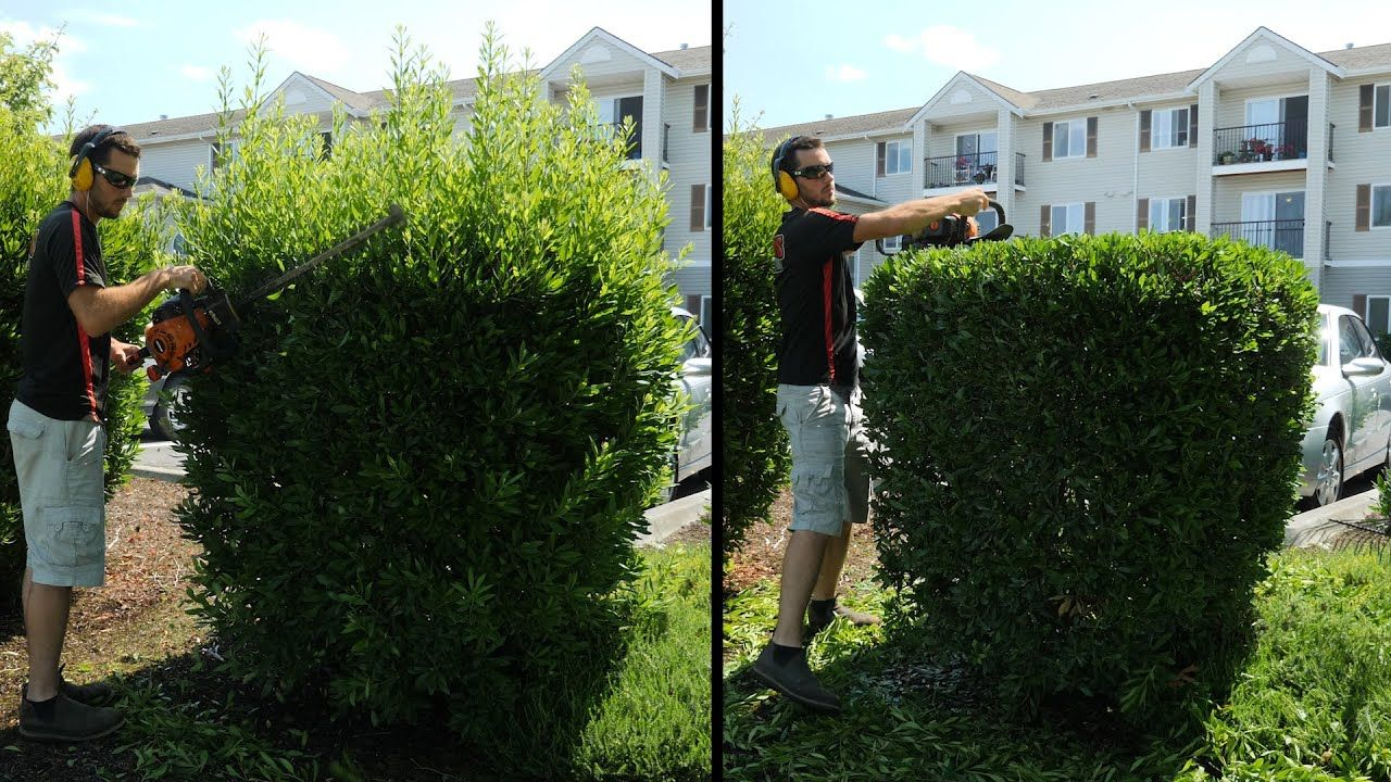 Hedge Trimming Overgrown Shrubs Rswal Ep 50 Youtube In 2020 How To Trim Bushes Hedges Boxwood Landscaping