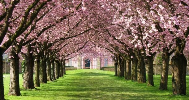 Download This Photo In Los Angeles United States By Indah Nur Indaheart Pink Blossom Tree Cherry Blossom Wallpaper Blossom Trees