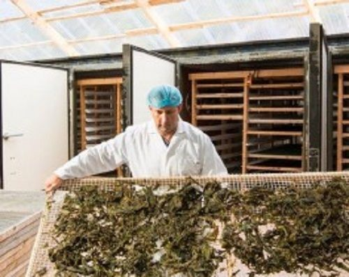 Seaweed is a billion-dollar industry worldwide, with China and Japan key players. In 2003, an FAO paper put the global industry at $6 billion, using as much as 8m tons.