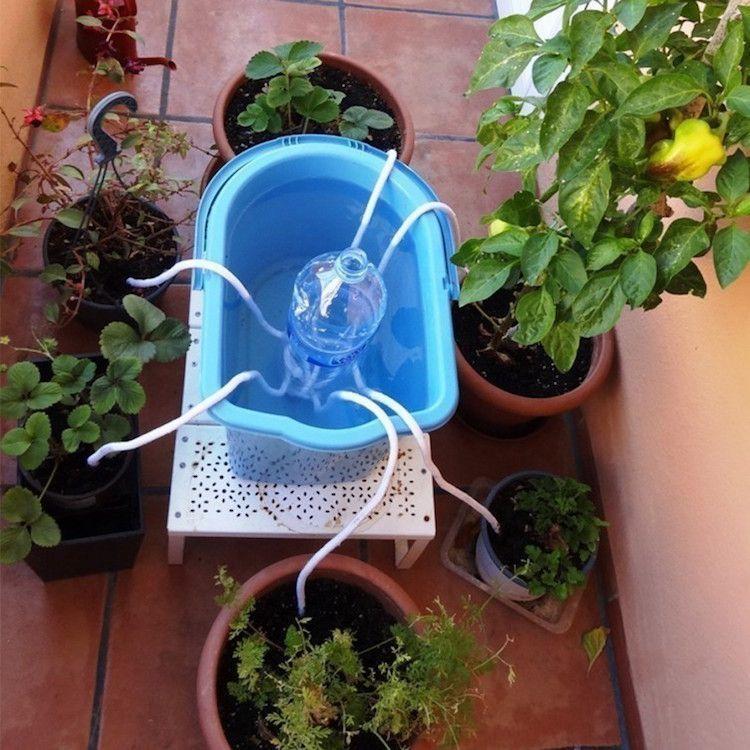 más de 25 ideas increíbles sobre regar las plantas en pinterest