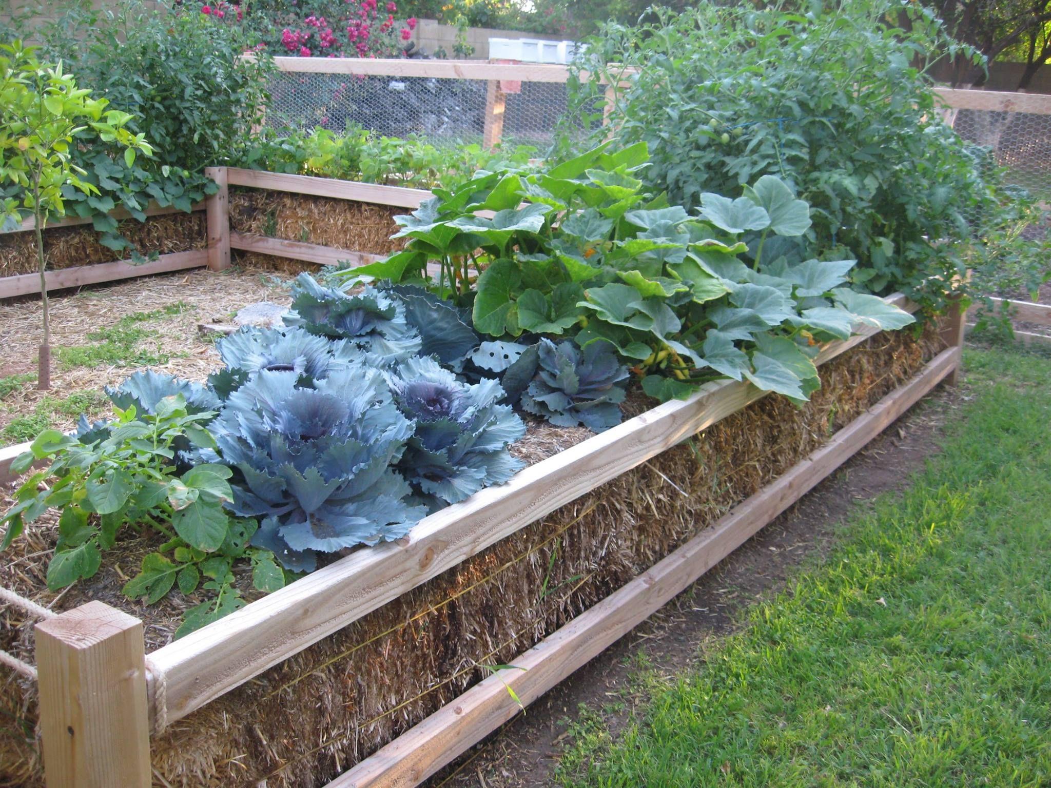 5e70de97fe43472aa42a41a9d2d2c194 - What Are The Basic Gardening Techniques