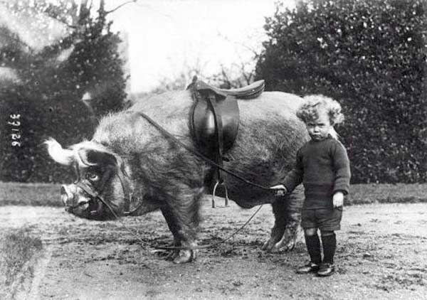 Boy and his pet riding boar 1930s
