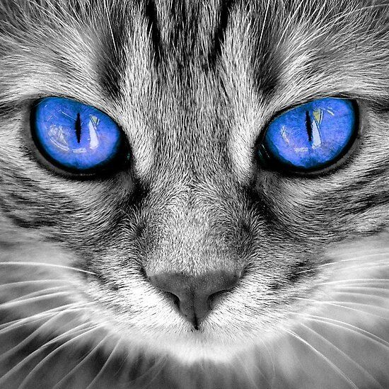 Untitled in 2020 Cat eye colors, White cat breeds, White
