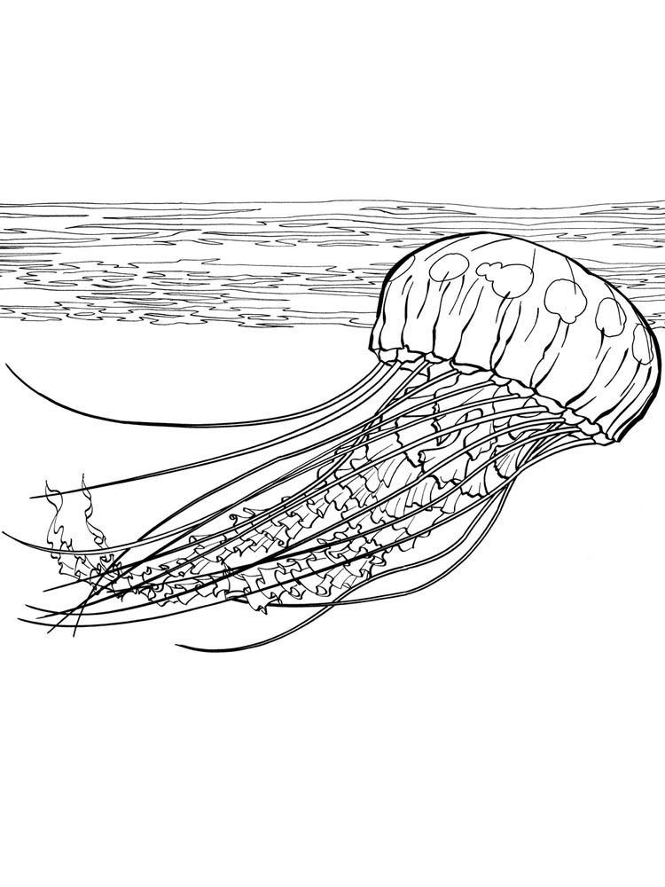 Jellyfish Coloring Sheets Printable Jellyfish Are Simple Living Things They Do Not Have The Brain Bones Coloring Sheets Animal Coloring Pages Coloring Pages