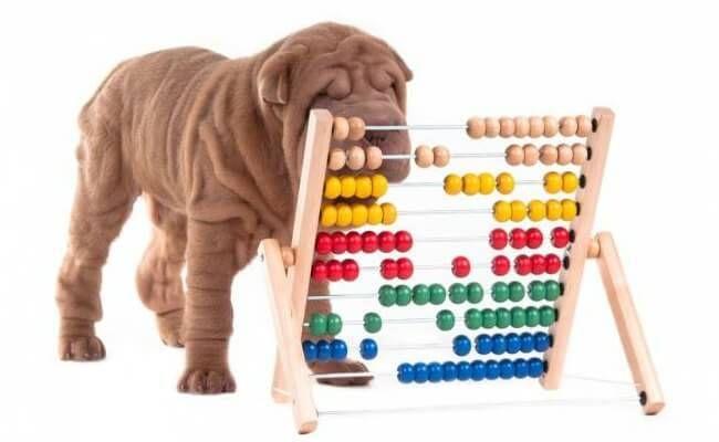 Juegos Interactivos Para Perros Sabes Como Hacerle Pensar Y Sus