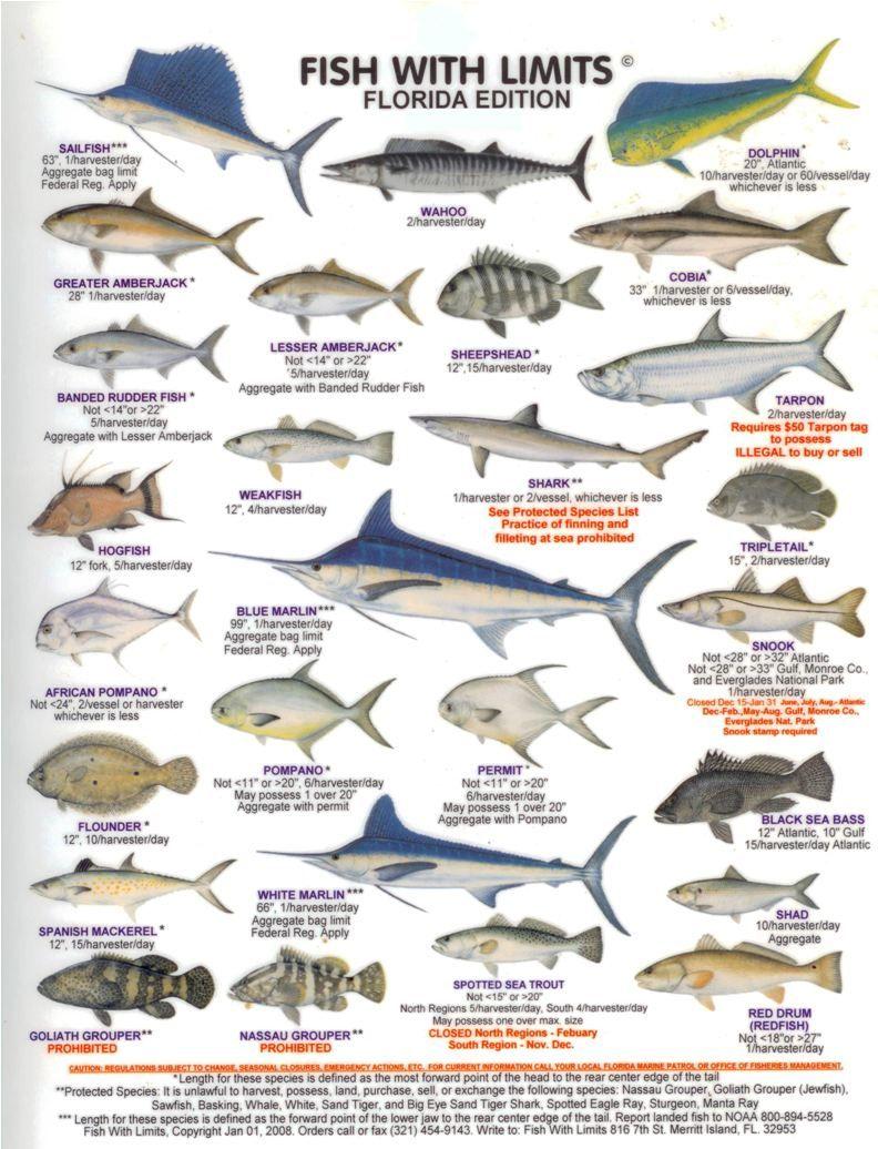Fish chart for Saltwater fish representative species