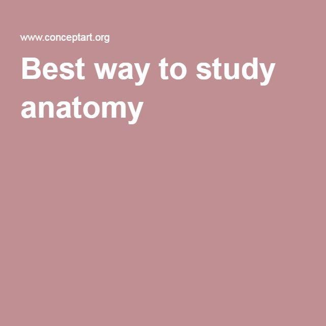Best way to study anatomy | Kreslení | Pinterest | Anatomy and ...