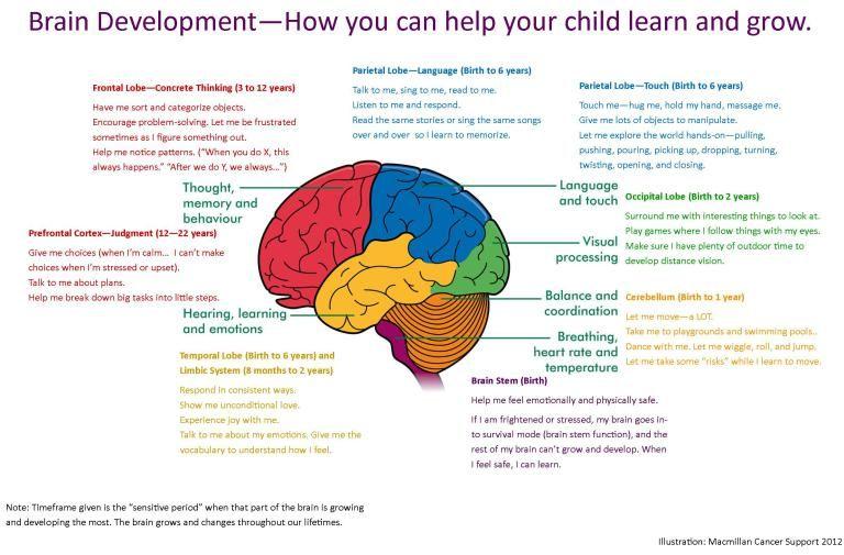 brain map | Brain development, Brain mapping, Brain diagram