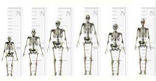 De izquierda a derecha: Australopithecus, Homo Habilis, Homo Erectus, Homo Heidelbergensis, Homo Neanderthalensis y Homo Sapiens