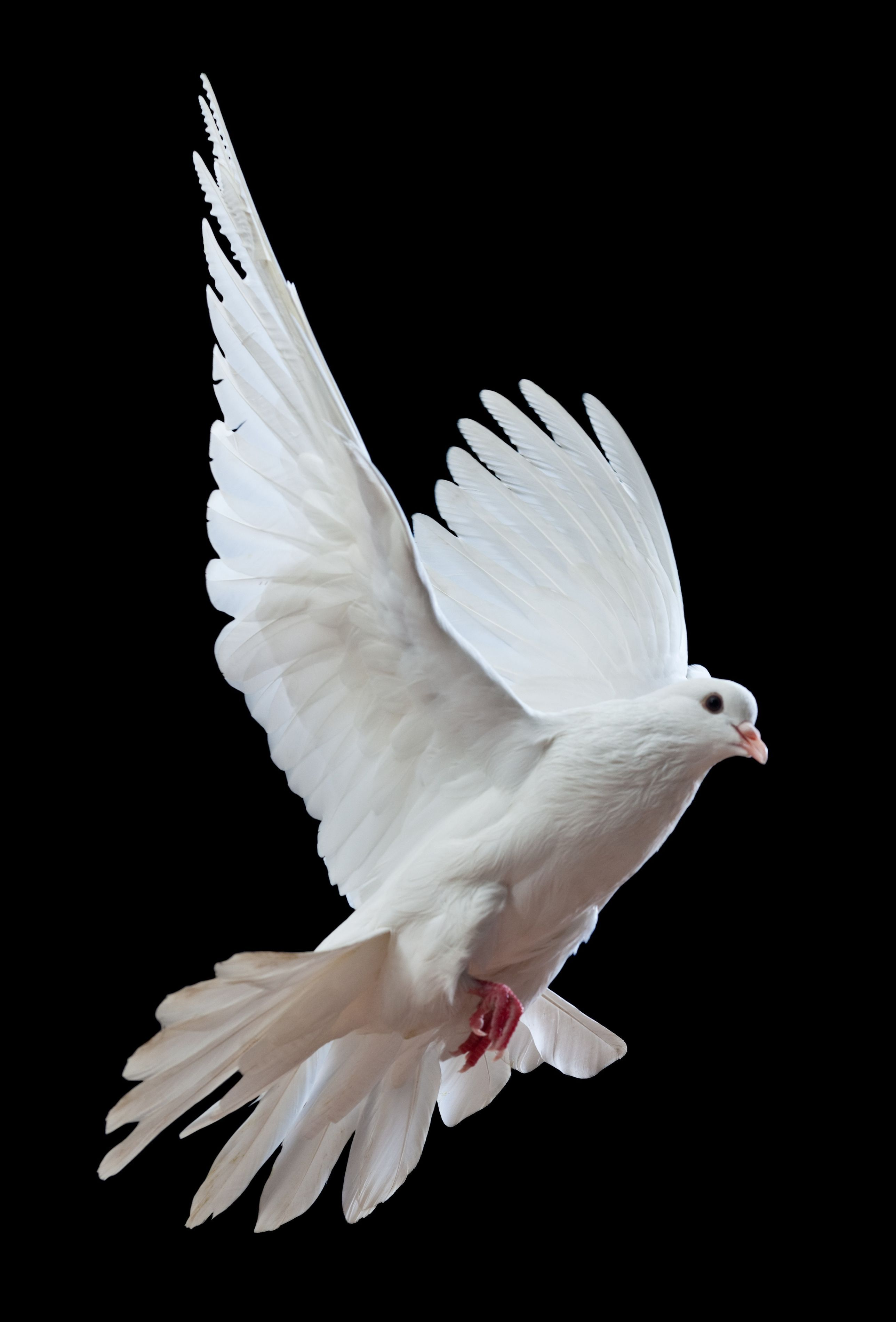 Photoshop Pro Create A Spirit Dove Effect Dove Images Dove Pictures Blue Background Images