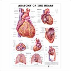 The Heart Flexible Laminated Chart