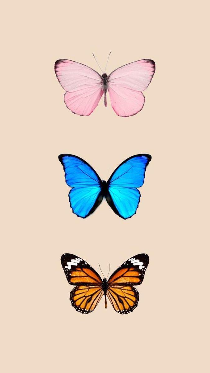 Pin by Bella Binev on FUNDOS LAU in 2020 | Butterfly ...