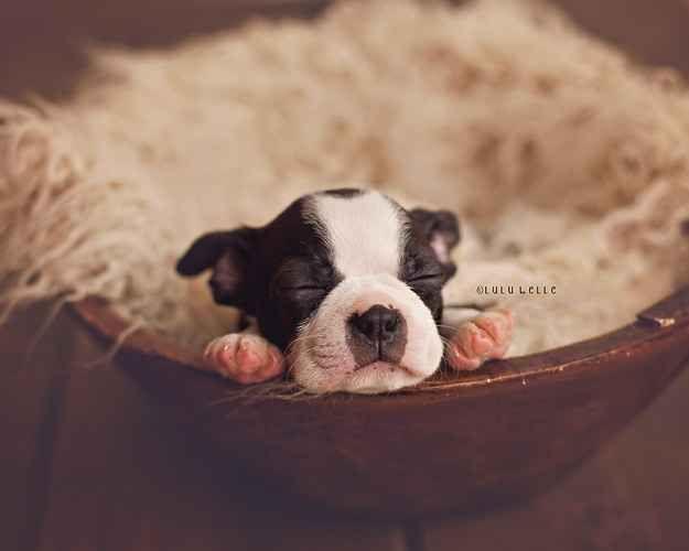 This Newborn Puppy Photoshoot Will Make Your Day Newborn Puppies