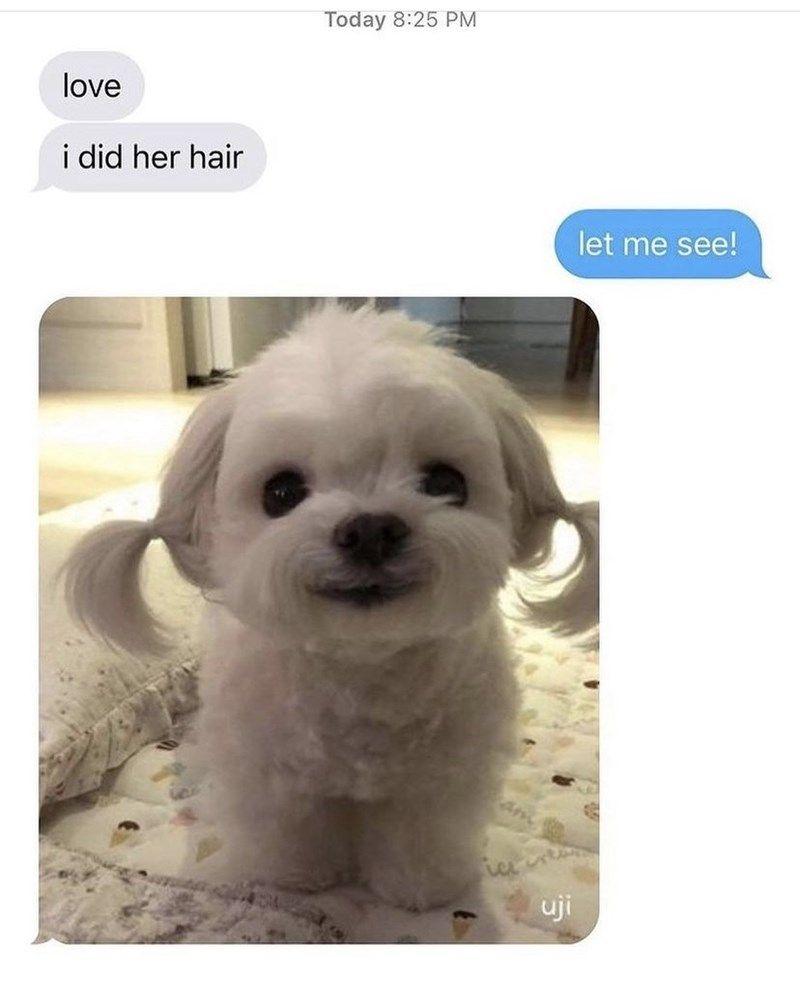 Fresh Doggo Memes Straight Off The Press