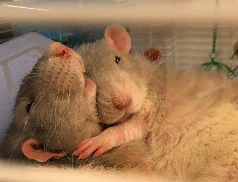 библиотеки картинки с мышами люблю есть